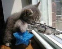 catsniper.jpg