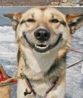 doghappy.jpg